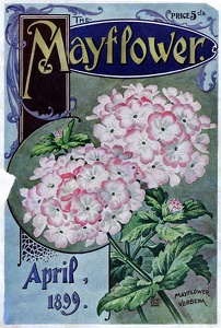 Mayflower 1899-04