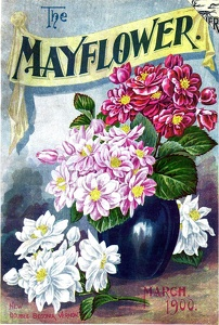 Mayflower 1900-03